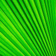 Royalty-Free Stock Photo: Green palm tree leaf for background