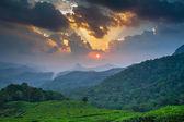 Beautiful sunset over green tea plantation in Munnar, Kerala, India — Stock Photo