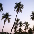 Stockfoto: Palm trees silhouette at the sunset, India