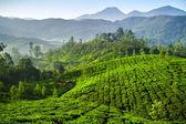Beautiful fresh green tea plantation in Munnar, Kerala, India — Stock Photo