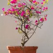 A blooming tree in the vintage pot against the wall in the stree — Stock Photo