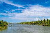インド ケララ州の背水に沿って椰子の木 — ストック写真