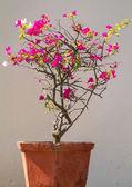 Kvetoucí strom v ročníku pot ke zdi v na stree — Stock fotografie