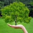 Beautiful green tree in a hand — Stock Photo