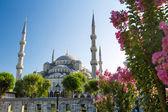 The Blue Mosque (Sultanahmet Camii), Istanbul, Turkey — Stock Photo