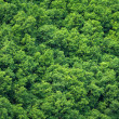 Green trees forest background, view from above — Stock Photo #31803711