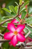 Beautiful tropical flowers closeup — Stock Photo
