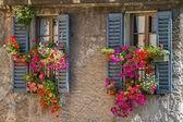 Vintage windows with open wooden shutters and fresh flowers — Stock Photo