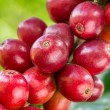 Coffee beans ripening on a tree — Stock Photo #41904241