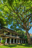 Old building under the big beautiful green tree — Stock Photo
