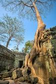 Ta Prohm temple at Angkor Wat — Stock Photo