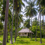 Small bungalow at  coconut   plantation — Stock Photo