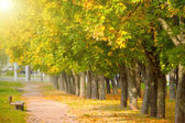 Maple trees in the autumn park — Stock Photo