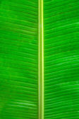 Green leaf background texture — Stock Photo