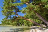 Lake Svityaz — 图库照片