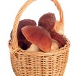Basket of mushrooms on white background — Stock Photo