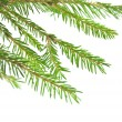 Pine tree branch isolated on white backgrond — Stock Photo #14080284