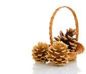 Pine cones in a basket — Stock Photo