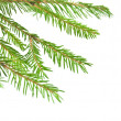 Pine tree branch isolated on white backgrond — Stock Photo #14447271