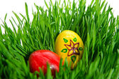 Red easter eggs in green grass with white background — Stock Photo