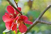 Beautiful red flower — Stock Photo