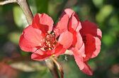 Linda flor vermelha — Fotografia Stock