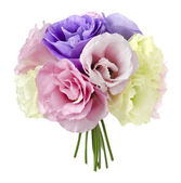 Eustoma fiori — Foto Stock