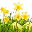 Yellow Flowers and easter eggs. Daffodil flower or narcissus ove — Stock Photo #44189523