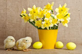 Cute little chicks and easter eggs — Stock Photo