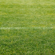 Grass sport field — Stock Photo
