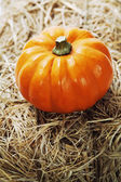 Harvest time, pumpkins — Stock Photo
