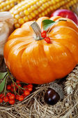 Harvest time, pumpkin — Stock Photo