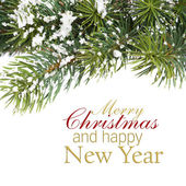 Branch of Christmas tree — Stock Photo