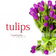 Purple tulips - Foto Stock