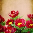 Stock Photo: Red flowers