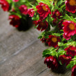 Red flowers — Stockfoto