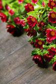 Röda blommor — Stockfoto