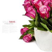 Róż — Zdjęcie stockowe