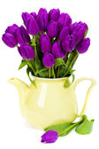 Purple tulips — Foto de Stock