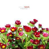 赤い花 — ストック写真