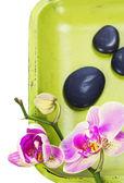 ピンクの orhid および禅小石 — ストック写真