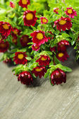 Red flowers — Stock fotografie