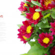 Red flowers — Stock Photo #18768953