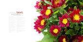 红色花朵 — 图库照片