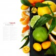 Citrus fruits border — Stock Photo #19728223