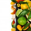 Citrus fruits border — Stock Photo