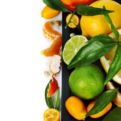 Citrus fruits border — Stock Photo