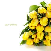 黄色のチューリップ — ストック写真
