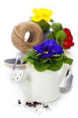 Primule fresche e attrezzi da giardino — Foto Stock