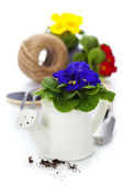 新鲜报春花属植物和园林工具 — 图库照片